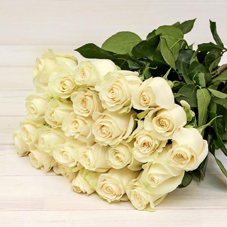 Цветы белые розы купить доставка цветов круглосуточно спб